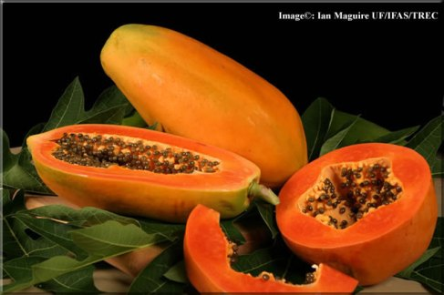 https://readerpedia.files.wordpress.com/2012/04/papaya-lg.jpg?w=300